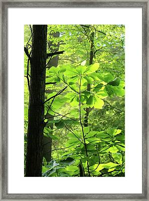 Leaf Umbrellas Framed Print by Art Block Collections