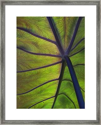 Leaf Veins Framed Print by Gene Ritchhart