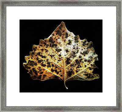 Framed Print featuring the photograph Leaf With Green Spots by Joseph Frank Baraba