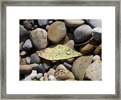 Leaf With Water Droplets In Rocks Framed Print