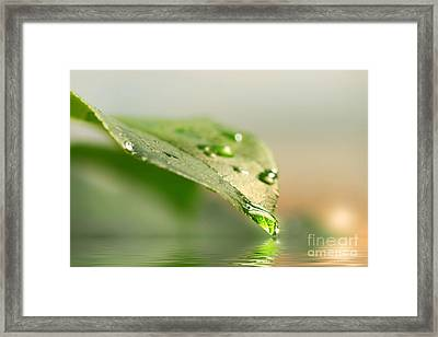 Leaf With Water Droplets Framed Print by Sandra Cunningham