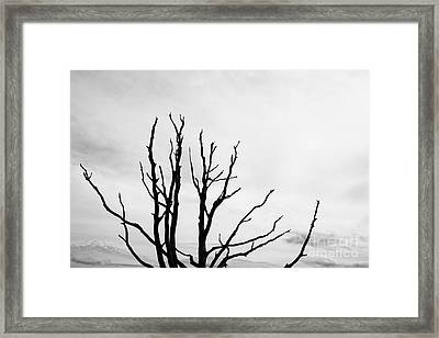 Leafless Tree Framed Print