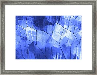 Leaft Texture In Blue  Framed Print by Tom Gowanlock