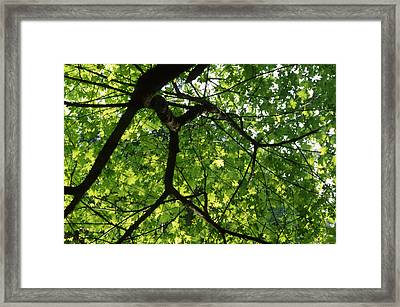 Leafy Canopy - Ventana Wilderness Framed Print by Soli Deo Gloria Wilderness And Wildlife Photography
