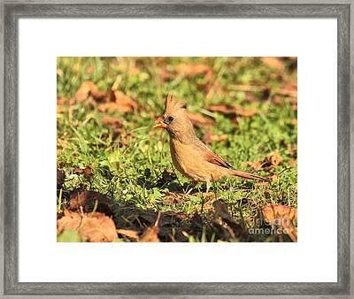 Leafy Cardinal Framed Print