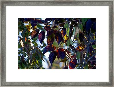 Leafy Light Show Framed Print by Ross Powell