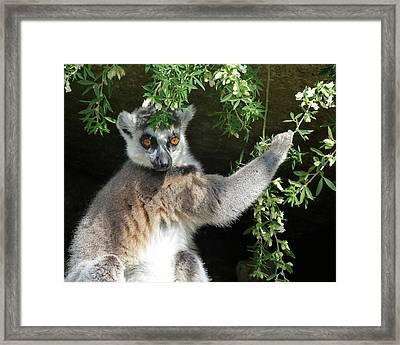 Leafy Patterned Lemur Framed Print by Margaret Saheed