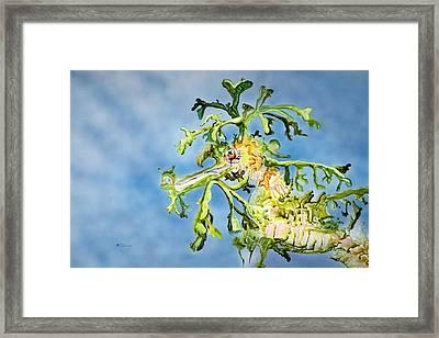 Leafy Sea Dragon Framed Print by Tanya L Haynes - Printscapes