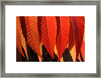 Leafy Valance Framed Print