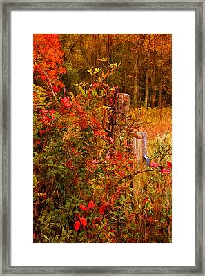 Lean On Me 2 Framed Print by HH Photography of Florida