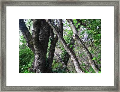 Lean On Me Framed Print by Donna Blackhall