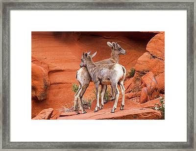 Lean On Me Framed Print by James Marvin Phelps