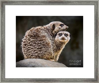 Lean On Me Framed Print by Jamie Pham