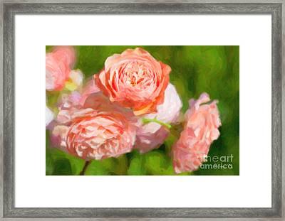 Leander English Rose Framed Print