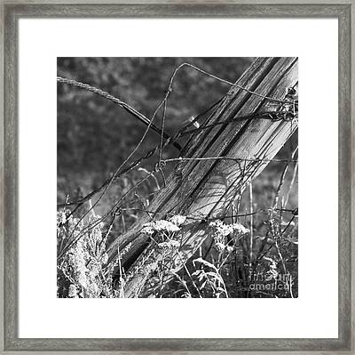 Leaning Farm Fence Post Amongst Weeds In Evening Sun Framed Print by Gordon Wood
