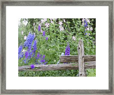 Leaning On The Fence Framed Print