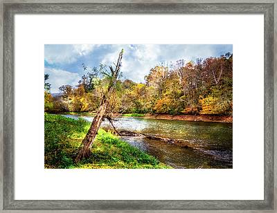 Leaning Tree Framed Print by Debra and Dave Vanderlaan