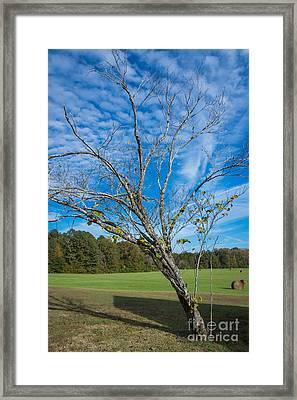 Leaning Tree Enhanced - Natchez Trace Framed Print by Debra Martz