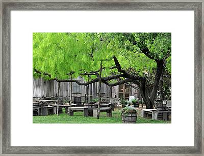Leaning Tree Framed Print by Teresa Blanton