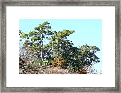 Leaning Trees On Hillside Framed Print