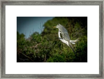 Leap Of Faith Framed Print by Marvin Spates