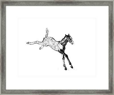 Leaping Foal Framed Print by JAMART Photography