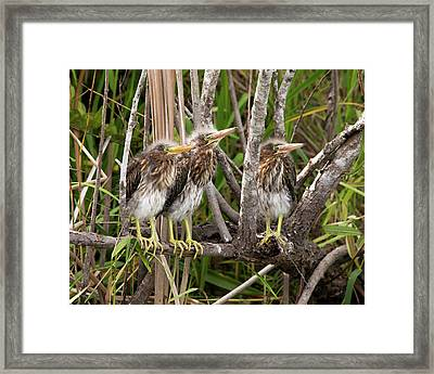 Learning To Be Self Sufficient Framed Print by Lamarre Labadie
