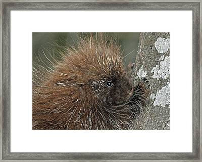 Framed Print featuring the photograph Learning To Climb by Glenn Gordon
