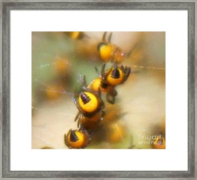 Framed Print featuring the photograph Learning To Fly by Erica Hanel