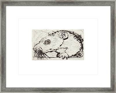Learning To Love Rats More #4 Framed Print
