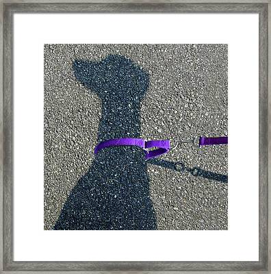 Leash Required On Sunny Days Framed Print