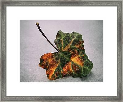 Leave Alone Framed Print