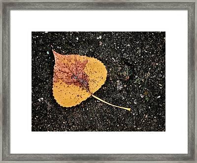 Leaved Framed Print by Tom Druin