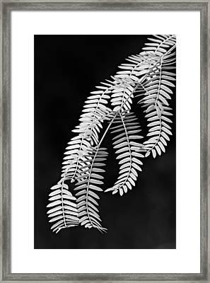 Leaves-1-st Lucia Framed Print