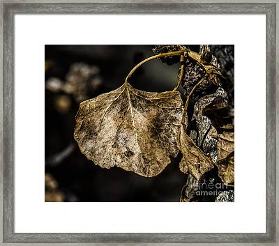 Leaves 4 Framed Print
