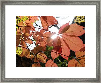 Leaves Again Framed Print by Trish Hale