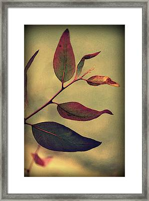 Leaves Framed Print by Amy Neal