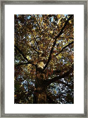 Leaves And Branches Framed Print