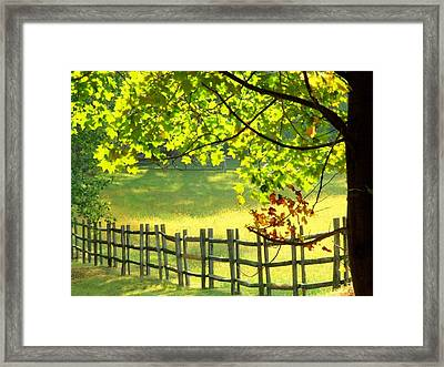Leaves And Fence Framed Print
