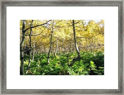 Leaves And Ferns Framed Print by Caroline Clark