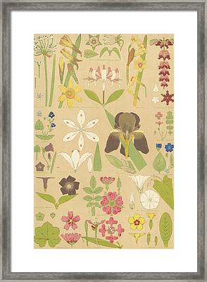 Leaves And Flowers From Nature Framed Print by English School