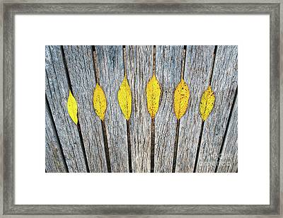 Leaves And Lines Framed Print by Tim Gainey
