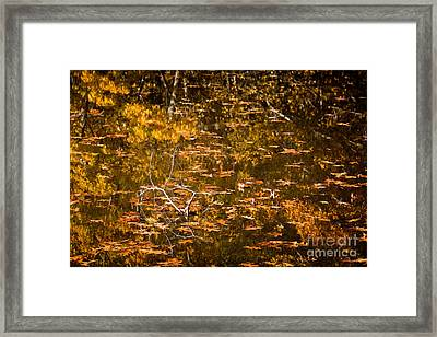 Leaves And Reflections Framed Print by Susan Cole Kelly