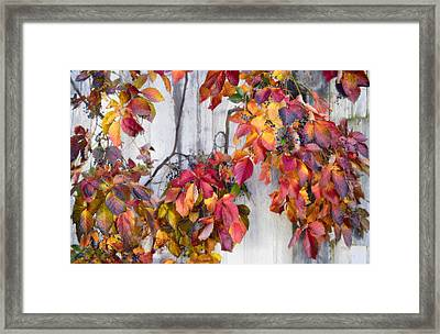 Leaves And Vines Framed Print by Donald Schwartz
