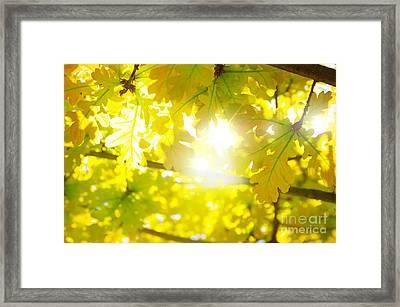 Leaves Backlight Framed Print by Carlos Caetano