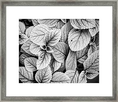 Leaves Black And White - Nature Photography Framed Print by Ann Powell