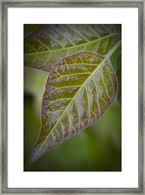 Framed Print featuring the photograph Leaves by Bob Decker