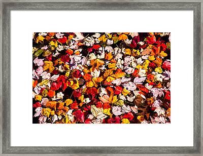 Leaves Galore Framed Print