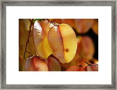 Leaves Hang For Fall-gerorgia Framed Print