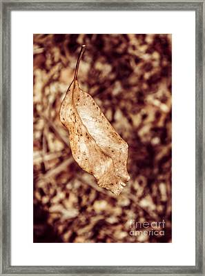 Leaves In Free Fall Framed Print by Jorgo Photography - Wall Art Gallery